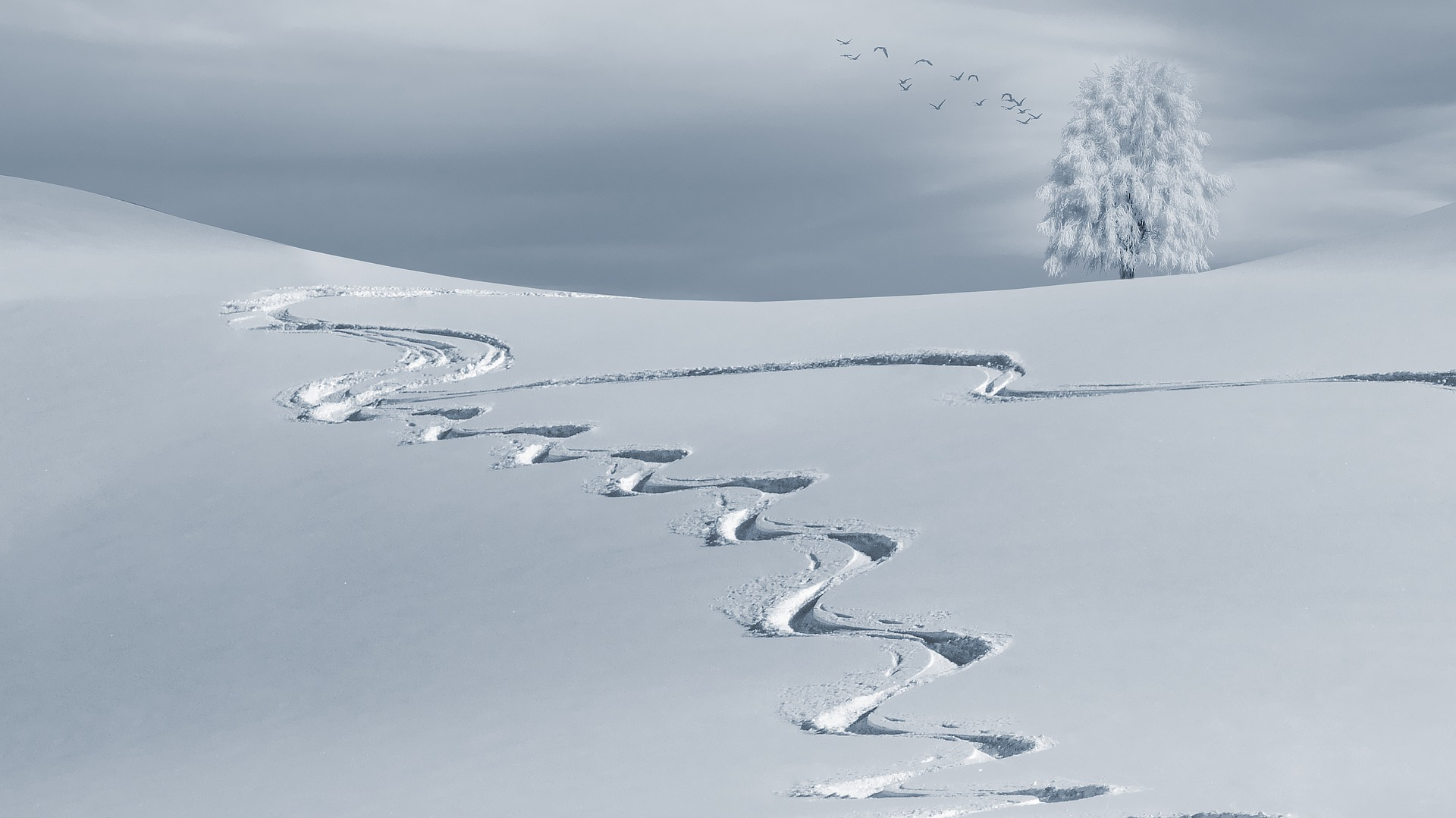 begeleide skireis 2