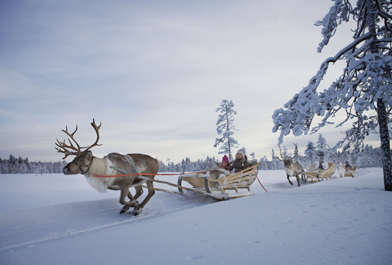 reindeer_lapland
